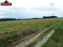 2,5 hektara w Santocku.