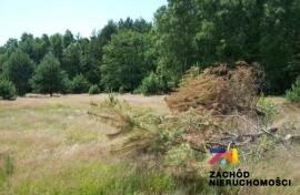 Działka pod lasem w Santocku